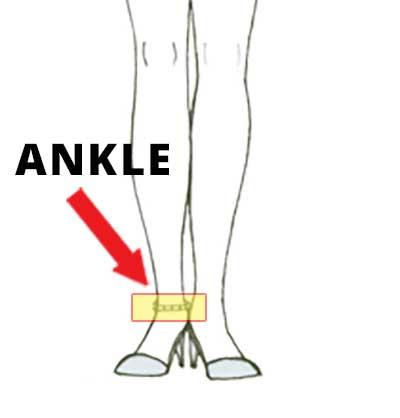Measurement - Ankle